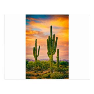 Arizona Life Postcard