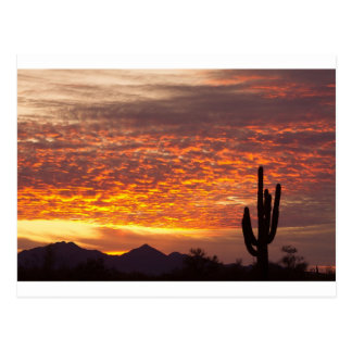 Arizona November Sunrise With Saguaro Postcard