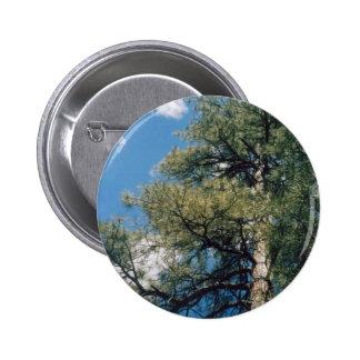 Arizona Pine Button