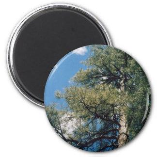 Arizona Pine 2 Inch Round Magnet