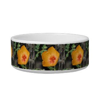Arizona Poppy Bowl