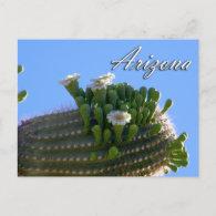 Arizona Postcard, Saguaro Cactus