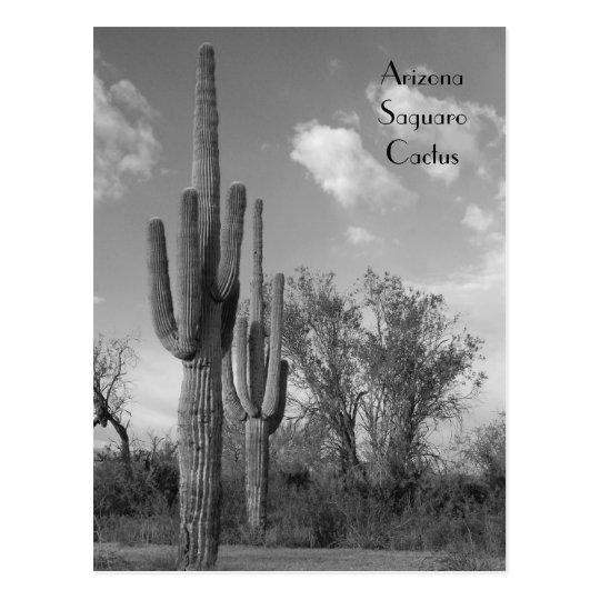 Arizona Saguaro Postcard