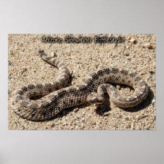 Arizona Sidewinder Rattlesnake Posters