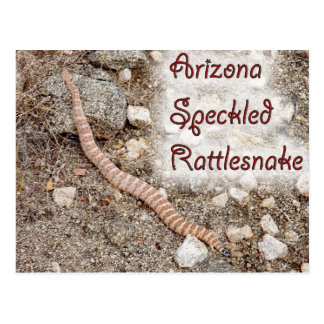 ARIZONA SPECKLED RATTLESNAKE POSTCARD