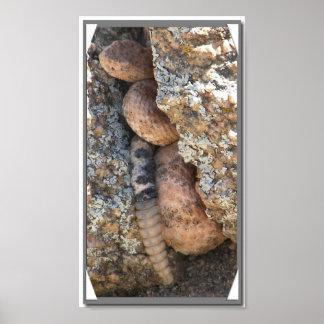 Arizona Speckled Rattlesnake Poster