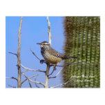 Arizona State Bird Postcards