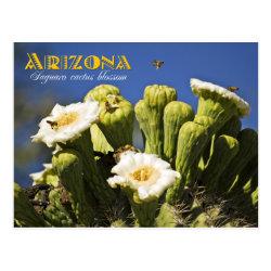 Arizona State Flower: Saguaro Cactus Blossom Postcard