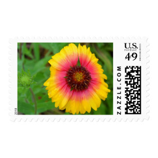 Arizona Sun Blanket Flower Postage