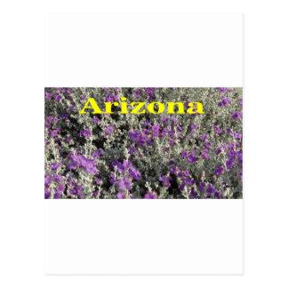 Arizona Texas Sage Postcard