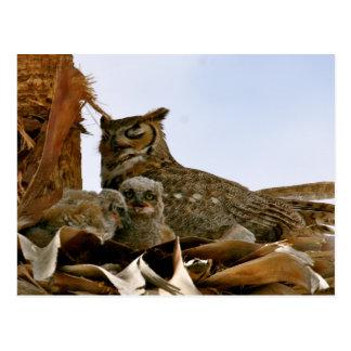 Arizona Tonopah Saddle Mt Owls Postcard