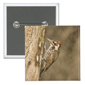 Arizona Woodpecker, Dendrocopos arizonae, South Pinback Button