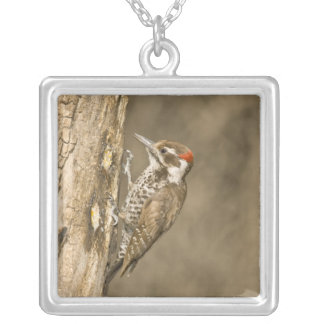 Arizona Woodpecker, Dendrocopos arizonae, South Square Pendant Necklace