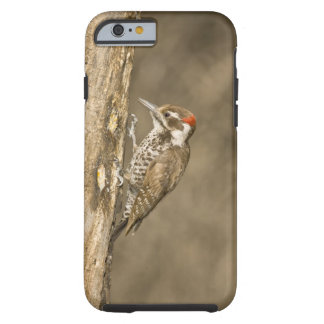 Arizona Woodpecker, Dendrocopos arizonae, South Tough iPhone 6 Case
