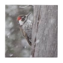Arizona Woodpecker in the Snow Ceramic Tile