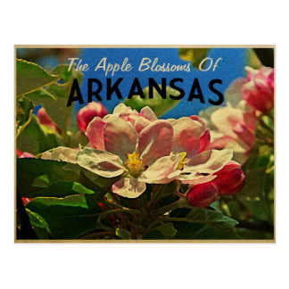 Arkansas Apple Blossoms Postcards