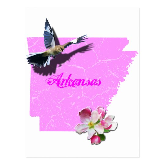 Arkansas Mockingbird Apple Blossom Postcard