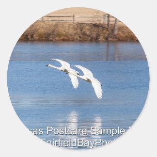 Arkansas Trumpeter Swans Classic Round Sticker