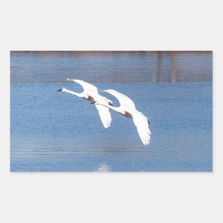 Arkansas Trumpeter Swans Rectangular Sticker