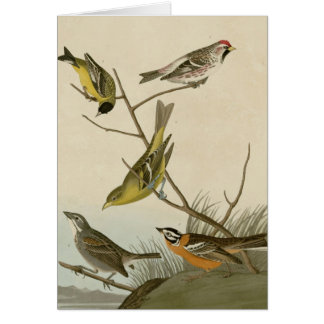 Arkansaw Siskin, Mealy Red-poll, Louisiana Tanager Card