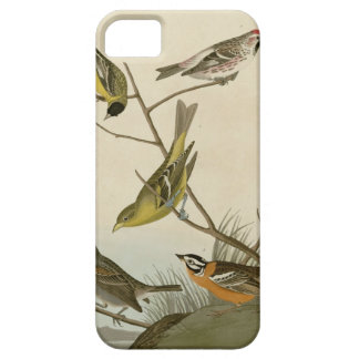 Arkansaw Siskin, Mealy Red-poll, Louisiana Tanager iPhone 5 Covers