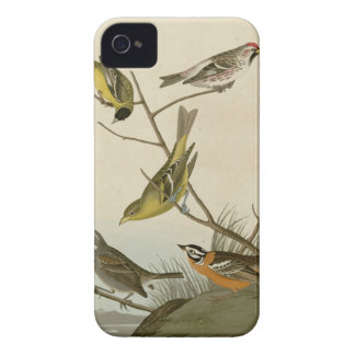 Arkansaw Siskin, Mealy Red-poll, Louisiana Tanager iPhone 4 Covers