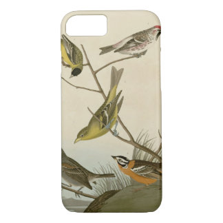 Arkansaw Siskin, Mealy Red-poll, Louisiana Tanager iPhone 7 Case