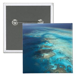 Arlington Reef, Great Barrier Reef Marine Park, Buttons