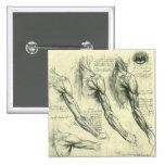Arm and Shoulder Anatomy by Leonardo da Vinci 2 Inch Square Button