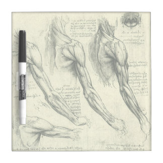 Arm and Shoulder Anatomy by Leonardo da Vinci Dry Erase Board