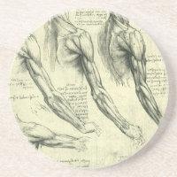 Arm and Shoulder Anatomy by Leonardo da Vinci