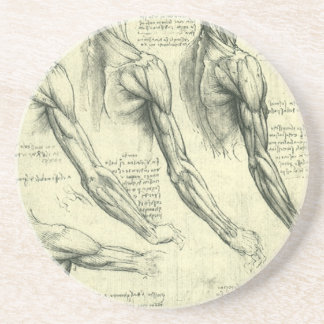 Arm and Shoulder Anatomy by Leonardo da Vinci Sandstone Coaster