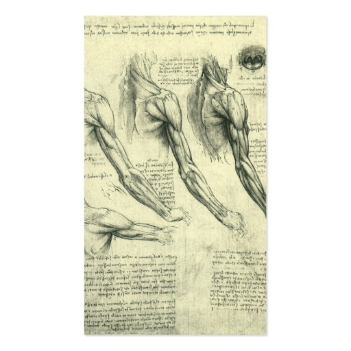 Arm and Shoulder Muscles Anatomy Leonardo da Vinci Business Card Templates (back side)