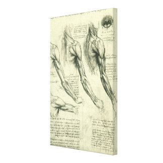 Arm and Shoulder Muscles Anatomy Leonardo da Vinci Gallery Wrapped Canvas