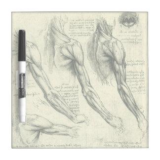Arm and Shoulder Muscles Anatomy Leonardo da Vinci Dry Erase Whiteboards