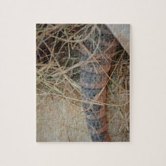 armadillo tail in hay animal image jigsaw puzzle