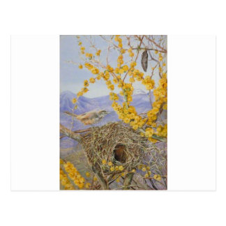Armed Bird's Nest in Acacia Bush, Chile by Mariann Postcard