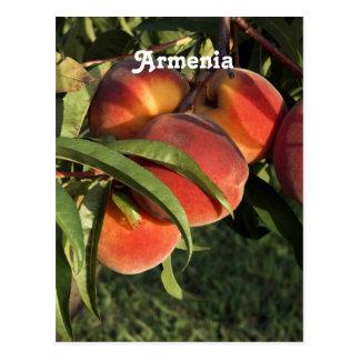 Armenian Apricots Postcard