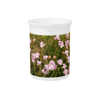 Armeria maritima pink sea growing on a cliff drink pitcher