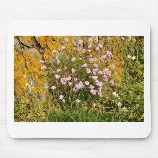Armeria maritima pink sea growing on a cliff mouse pad