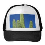 Arms Of A Saguaro Mesh Hats