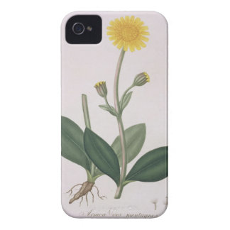 Arnica Montana from 'Phytographie Medicale' by Jos Case-Mate iPhone 4 Case