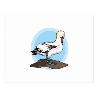 Arnold Albatross Postcards