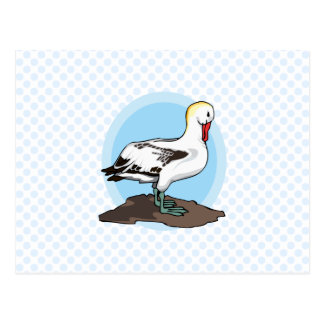 Arnold Albatross Postcard