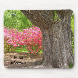 Arnold Arboretum Spring Colors Mouse Pad