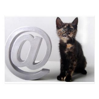 Arobas whit Kitten Postcard