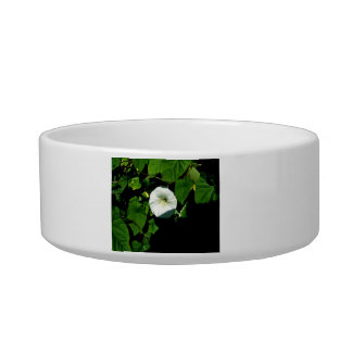 Aromatic White wild flowers under the shadow Cat Water Bowls