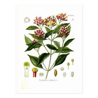 Aromaticus de Caryophyllus (clavo) Tarjeta Postal