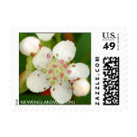 Aronia melanocarpa, black chokeberry postage stamps