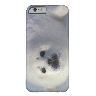 Arpa de una semana del groenlandica) del Phoca de Funda De iPhone 6 Barely There